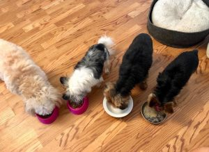 Dogs Eating Togetner